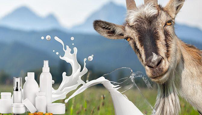 Výjimečnost kozího mléka v kosmetice